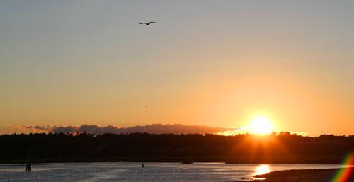 sunset_gull